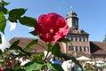 Das F├╝rstliche Gartenfest Schloss Wolfsgarten_Marc Strohfeldt.jpg