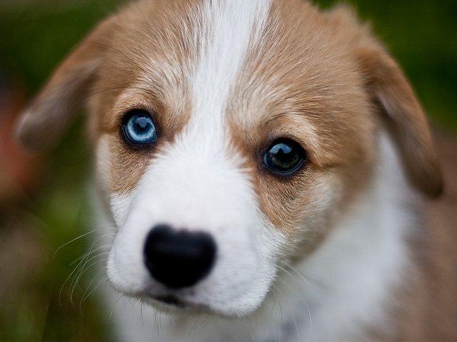 11_17_puppy.jpg