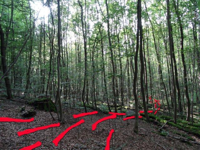 Energy Lines Waldkunstpfad